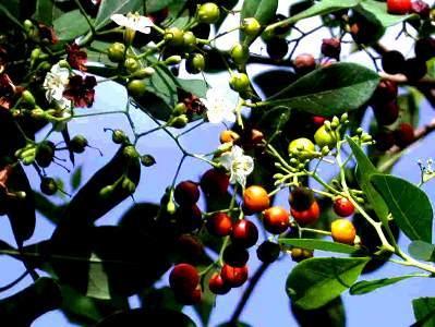 flores-e-frutos