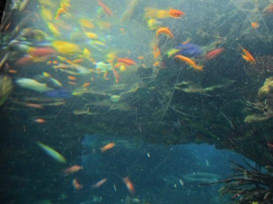 peixes-felipe-28100213